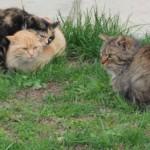 Новые штрафы за нарушение правил содержания домашних животных могут появиться в Беларуси