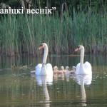 Теплая сухая погода ожидается в Беларуси в выходные