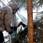 Охрана в судьбах Беларуси усилена: за незаконную вырубку елей грозит штраф