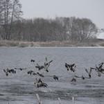 В праздничные выходные в Беларуси ожидается сырая и ветреная погода