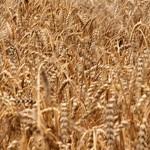 Зерна в закромах