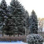 Оранжевый уровень опасности объявлен в Беларуси 27 декабря из-за сильного ветра