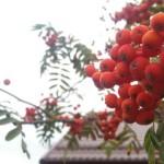 Слабый гололед и 6 градусов тепла ожидается в Беларуси 21 ноября