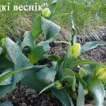 Теплая погода придёт в Беларусь в конце апреля