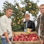 В Ляховичском государственном аграрном колледже снимают урожай яблок, а в садах ляховичан яблоки зацвели …