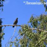 Теплая неустойчивая погода ожидается в Беларуси в выходные