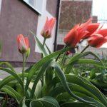 Потепление ожидается в Беларуси в выходные